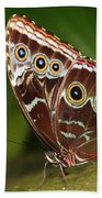 Common Blue Morpho Beach Towel