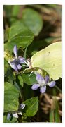 Common Brimstone Beach Towel