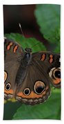 Common Buckeye Beach Towel