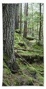 Coniferous Forest, Inside Passage Beach Towel