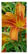 Consider The Lilies Of  The Field - Hemerocallis Fulva Beach Towel