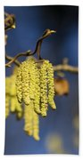 Contorted Hazel Catkins Beach Towel