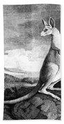 Cook: Kangaroo, 1773 Beach Towel