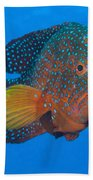 Coral Grouper, Kimbe Bay, Papua New Beach Towel