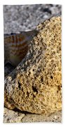 Coral On Shore Beach Towel