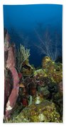 Coral Reef And Sponges, Belize Beach Towel