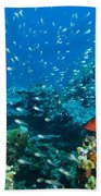 Coral Reef In Thailand Beach Towel