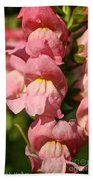 Coral Snapdragons Beach Towel