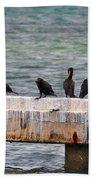 Cormorants Key West Beach Towel