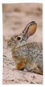 Cottontail Bunny Beach Towel
