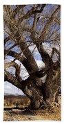 Cottonwood Tree At San Pedro House Beach Towel