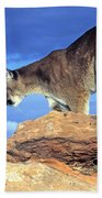 Cougar In The Sky Beach Towel