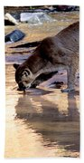 Cougar Stops For A Drink Beach Towel
