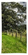 Countryside With Old Fig Tree Beach Towel