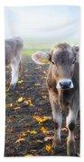 Cows Beach Towel