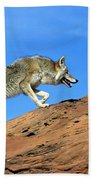 Coyote Climbs Mountain Beach Towel