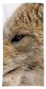 Coyote Beach Towel