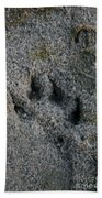 Coyote Beach Towel by Susan Herber