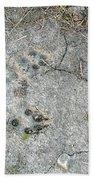 Coyote Tracks Beach Towel