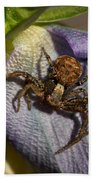 Crab Spider In A Violet Beach Towel