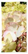 Cream Pink Hydrangea Flowers Art Prints Floral Beach Towel