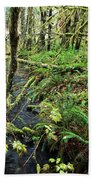 Creek In The Rain Forest Beach Towel