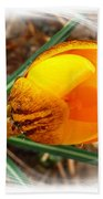 Crocus Gold Two Beach Towel