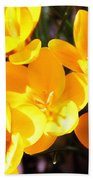 Crocuses In Yellow Beach Towel