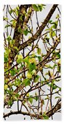 Cucumber Tree Blossoms Beach Towel