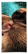 Cuddles Beach Towel