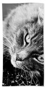 Cuddly Cat Beach Towel