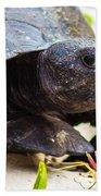 Curious Turtle Beach Towel