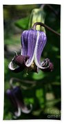 Curly Clematis Beach Towel