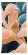 Curvularia Geniculata Beach Towel