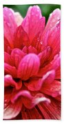 Dahlia Dew Drops Beach Towel