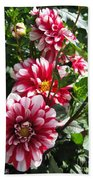Dahlia Named Yoro Kobi Beach Towel