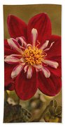Dahlia Beach Towel by Sandy Keeton