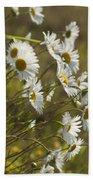Daisies Blowin In The Wind Beach Towel