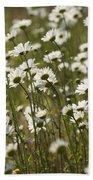 Daisy Fields Forever - Alabama Wildflowers Beach Towel
