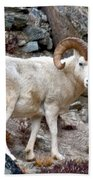 Dall's Sheep Beach Towel