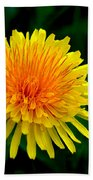 Dandy Among Daisies Beach Towel