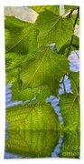 Dangling Leaves Beach Towel by Deborah Benoit