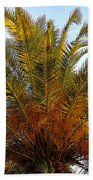Date Palm Beach Towel