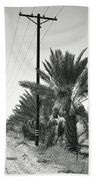 Date Palms On A Country Road Beach Towel