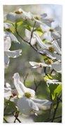 Dazzling Sunlit White Spring Dogwood Blossoms Beach Towel