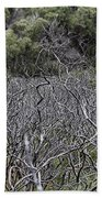 Dead Tree Garden Beach Towel