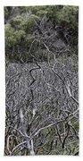 Dead Tree Garden Beach Sheet