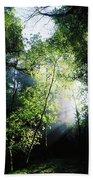 Deciduous Wood, Killarney National Beach Towel