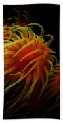Deep Ocean Coral Polyp Beach Towel