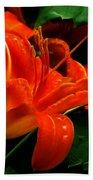 Deep Orange Day Lily Beach Towel